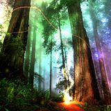 Sacred Echo Sound Healing 4