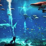 Whale Sharks and Prog Rock