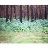 Sibérie Sound System #5 : Omsk la perchée