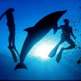 Deep Diving Beats