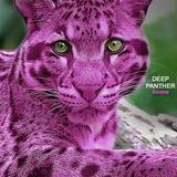 Deep Panther
