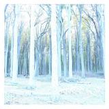 Christopher Schwarzwalder - Late Autumn