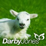 Episode 125 - Darby Jones