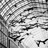 Let The Birds Fly