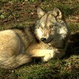 Kris Abel Interviews Great Lakes Wild's Amanda Buckiewicz