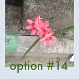 Option #14 - findings - Resom for BCR
