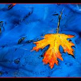 Autumn blues 2009