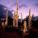 Tucson Shows Mixtape Nov/Dec