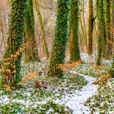 Ecstatic Dance Winter Regeneration: Destination Nijmegen