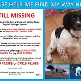 Can You Help Find Archie.  Please Share This MixCloud.