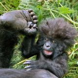 The Stupid Monkey aka Zemonk à RadioCanut