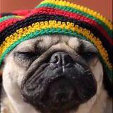 Roots Reggae Party - Dj Nico Cieza