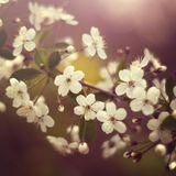 Dj Sasha K - Spring Blossoms 2015