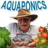 Aquaponics Fish: Jade Perch