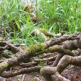 The Ivy-Strangled Path Vol. XII