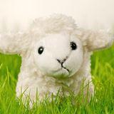 Salient - Lammie