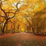 mixing fall