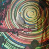 Mutecast #50 - Careful with that albatross in the caravan, my dear
