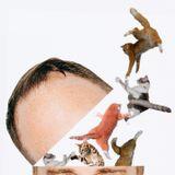 Head Full of Cats