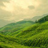 Green Tea 3-13-13