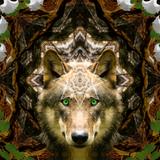 Spirit Animal // 200 to 400 BPM // Psycore/Hitech Set