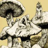 Trip to Ants Galaxy mix by KAZINAKI(Mooranglee family)