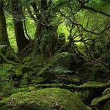 psy-forest dj mix by Alakazoo