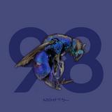 98 Nights
