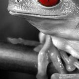 white frog boccaccio beach 14-05-2016