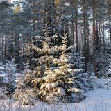 RMK Valgamaa metsaülem Risto Sepp selgitab, kuidas riigimetsast jõulukuuske osta.
