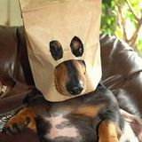 Doghouse Under Cover