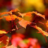 Kopf über Hals Vol.2 (autumn twentytwelvemix)