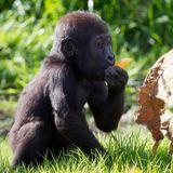 Dublin Explorer - Dublin Zoo (December 2011)