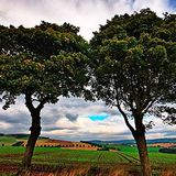 Which Tree Are You Living From part 2 - Paul McMahon - 12th November 2017