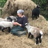 World of Joy #1 - British Wool Week