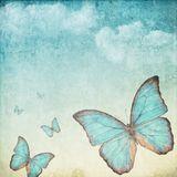 A Butterfly's Journey