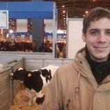 Veaux, Vaches, Cochons