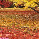 nemiegu - Autumn