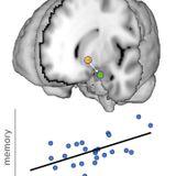 Cérebro adolescente é melhor adaptado para aprender que o adulto