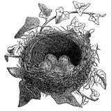 Black Nest Mix