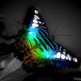 Dj Antony Frost - Butterfly