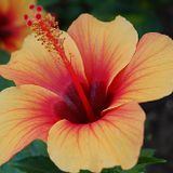 Mix from the Maui Lani Drs. Open House Nov.22.16