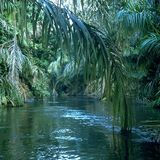 The Forest (Moondog - Cosmin TRG - Hyetal - Mount Kimbie - BNJM - Martyn - Scuba - Anne Clark)