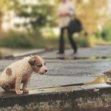 L'abandon des animaux : mythe ou réalite ?