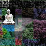 Further Meditations From The Herb Garden