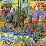 House of Stray Flowers..more Japanese Psych, alt. Stones, live Zipps, Goblin, Mothers, Cynics & more