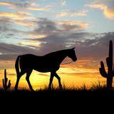 Gistro FM 687 (07/04/19) Horses