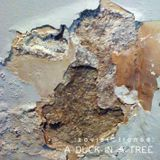 A Duck in a Tree 2014-06-21 | The Measurement of Echoes with Powder