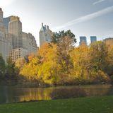 Oct 4: Autumn in New York's Deluxe Apt.
