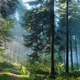 Kristina Aqua - Forest Fusion morning set